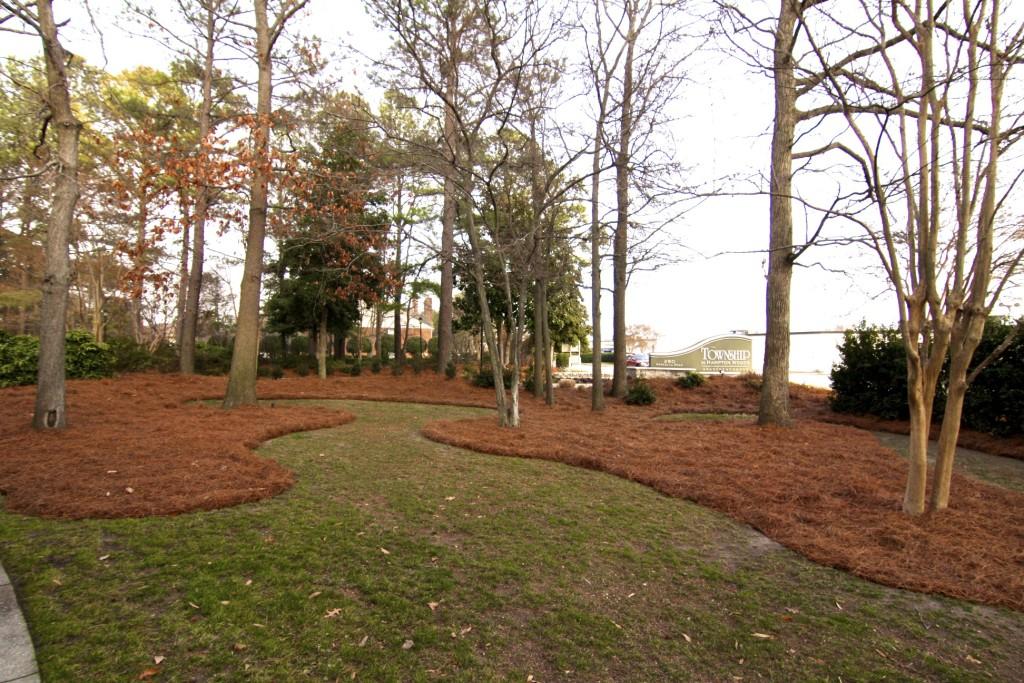 Pine Straw Yard